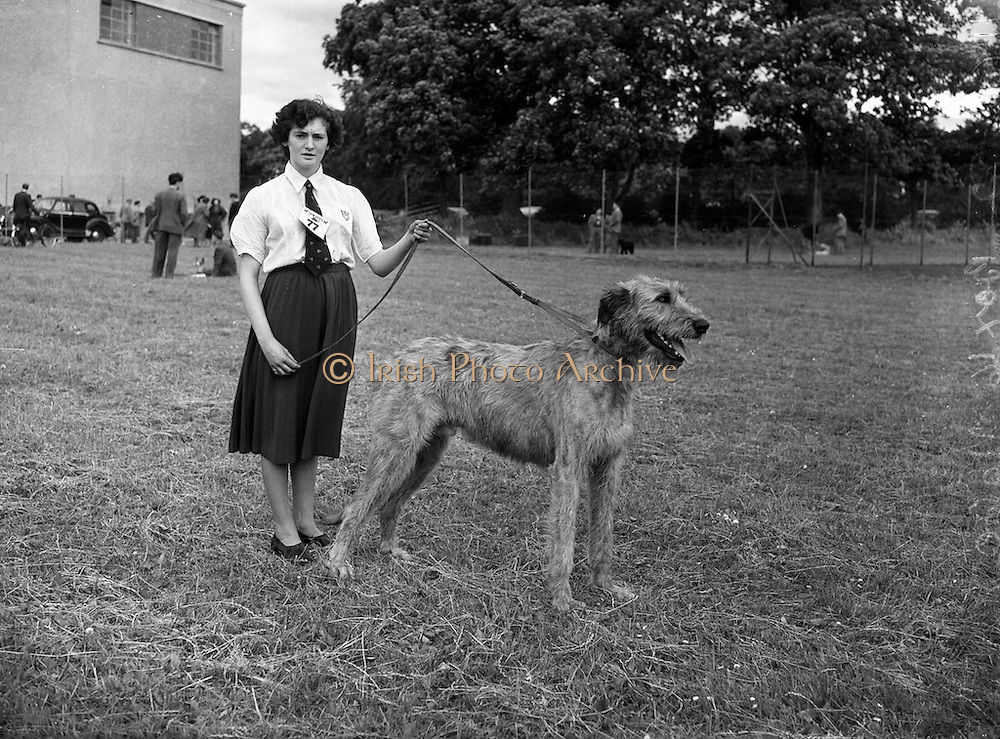 "19/07/1952<br /> 07/19/1952<br /> 19 July 1952<br /> Dog show: All Breed Championship, 10th Annual Show of the Combined Canine Clubs at Terenure College,<br /> Templeogue Road Terenure Dublin. Miss Billie Kerr Donnan, Castle Down, Cloughy, Co. Down, with her Irish Wolfhound ""Fuath f Ulaid""; (1st in Junior and Graduate Class)."