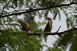 Heron (Photo by Alan Look)