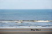 Nederland, Wijk aan zee, 5-3-2014Paarden met een buggy lopen over het strand langs de zee, noordzee, kustFOTO: FLIP FRANSSEN/ HOLLANDSE HOOGTE