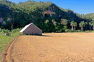 Barn and field in the San Carlos area, Pinar de Rio, Cuba.