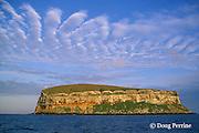 Darwin or Culpepper Island, northern Galapagos Islands, Ecuador,, Ecuador ( Eastern Pacific Ocean )
