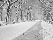 Literary Walk, aka The Mall, in Central Park during a snow storm.