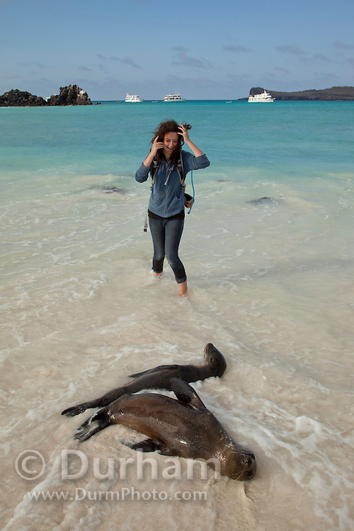 A young tourist nears Galapagos sea lions(Zalophus californianus) on the beach of Espanola Island, Galapagos Archipelago - Ecuador. (fully released - 82010EXsP)