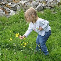 Europe, Ireland, Mullaghmore. Toddler picking daisies at Creevykeel Court Tomb in Ireland.