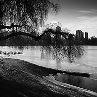 Lone man sitting on park bench, looking onto frozen late, city in background.