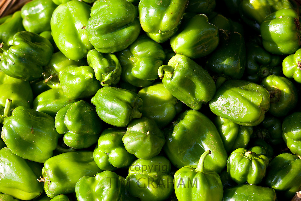 Fresh green peppers, capsicums, on sale at market stall in Varanasi, Benares, India..