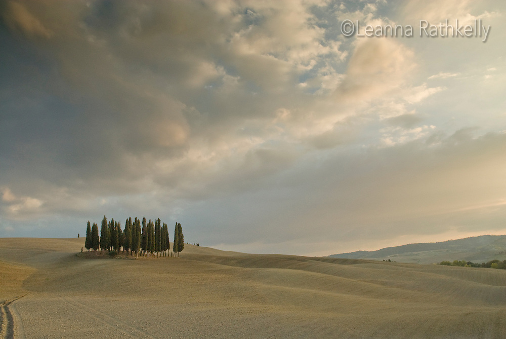 Cypress trees stand guard over the plowed fields of autumn, near San Qirico d'Orcia.