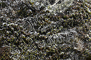 Mamakating, New York - A coating of ice covers moss on a rock in a stream at the Bashaskill Wildlife Management Area on March 26, 2011.