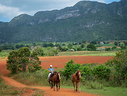 North America, Caribbean, Cuba, Vinales,farmer on horseback and tobacco fields.The Vinales Valley is a UNESCO World Heritage Site.,