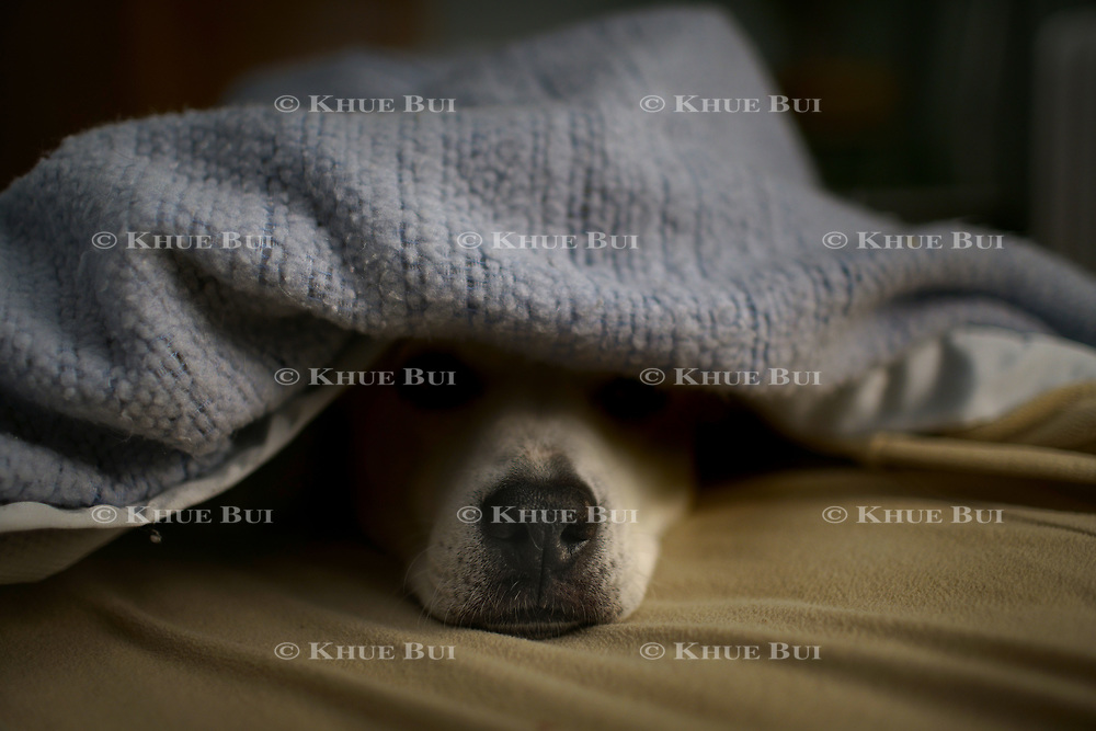 Izzie sleeps under her blanket December 28, 2017, in Richmond, VA.<br /> <br /> Photo by Khue Bui