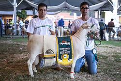 White Dorper na 38ª Expointer, que ocorre entre 29 de agosto e 06 de setembro de 2015 no Parque de Exposições Assis Brasil, em Esteio. FOTO: Pedro H. Tesch/ Agência Preview