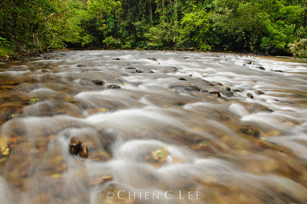 An increasingly rare sight, clear rocky streams are an important and indicative component of pristine habitats in Borneo rainforests. Sarawak, Malaysia.