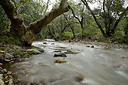 This stream is several miles south of the Rosemont Mine. Seasonal monsoon flow fills Cave Creek in the foothills of the Santa Rita Mountains, Cave Canyon, Gardner Canyon, Coronado National Forest, Sonoita, Arizona, USA.