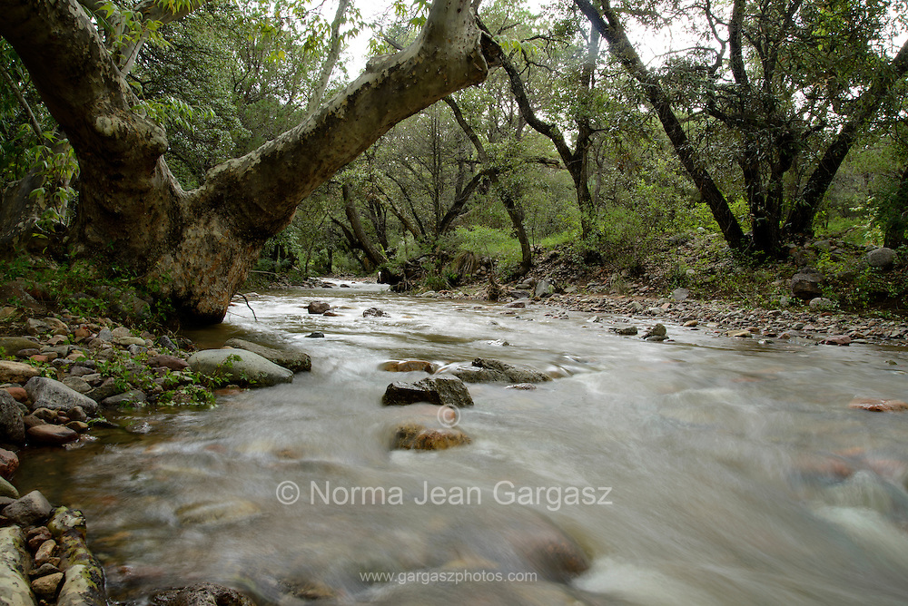 Seasonal monsoon flow fills Cave Creek in the foothills of the Santa Rita Mountains, Cave Canyon, Gardner Canyon, Coronado National Forest, Sonoita, Arizona, USA.