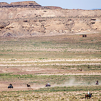 082913       Cable Hoover<br /> <br /> Volunteers on ATVs and dirt bikes chase down a wild horse during a roundup near White Rock Aug. 29.