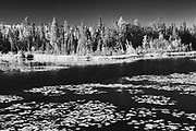 Wetland and boreal forest<br />Near Yellowknife<br />Northwest Territories<br />Canada