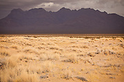 Dry grass and mountains of the Mojave Desert in the Mojave National Preserve, Kelso, CA