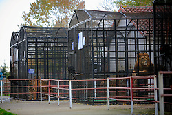 ROMANIA ONESTI 26OCT12 - General view of animals in cages at the Onesti zoo which has been shut down due to non-adherence with EU regulations on the welfare of animals.....jre/Photo by Jiri Rezac / WSPA....© Jiri Rezac 2012