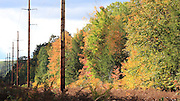 These wooden towers suggest a line toward infinity, as they carry electric power through the remote forest of Manistee County Michigan.