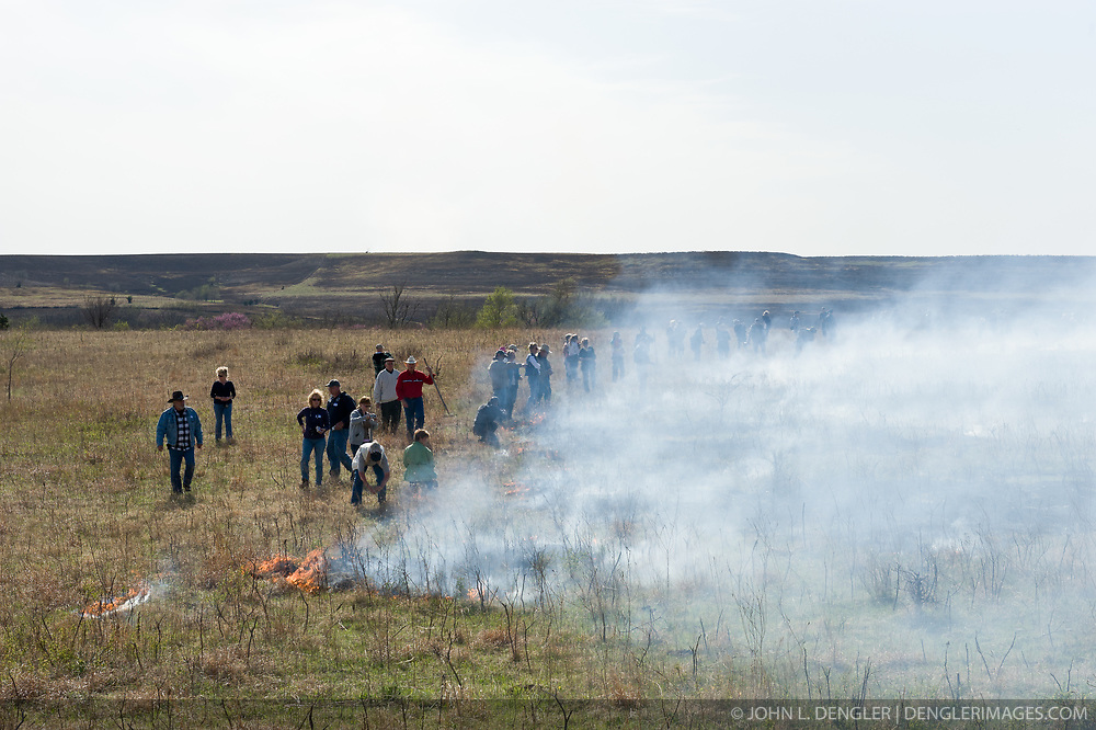 "Participants in ""Flames in the Flint Hills"" light fires across the prairie grass of the Flying W Ranch near Clements, Kansas. This agritourism event allows ranch guests to take part in lighting the prescribed burns. Prairie grasses in the Kansas Flint Hills are intentionally burned by land mangers and cattle ranchers in the spring to prepare the land for cattle grazing and help maintain a healthy tallgrass prairie ecosystem. The burning is also an effective way of controlling invasive plants and trees. The prairie grassland is burned when the soil is moist but grasses are dry. This allows the deep roots of the grasses to survive and the burned grasses on the soil surface return as nutrients to the soil. These nutrients allow for the rapid growth of new grass. After approximately two weeks of burning, new grass emerges. Less than four percent of the original 140 million acres of tallgrass prairie remains in North America. Most of the remaining tallgrass prairie is in the Flint Hills in Kansas."