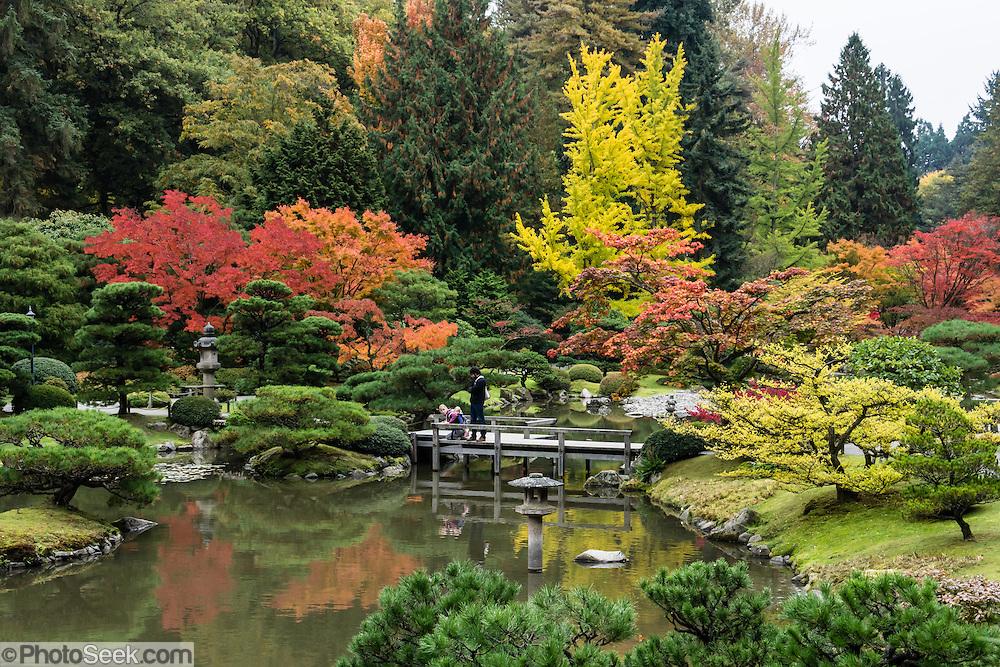 Fall foliage colors, pond. The Seattle Japanese Garden was completed in 1960 within UW's Washington Park Arboretum. Address: 1075 Lake Washington Blvd E, Seattle, Washington 98112, USA.