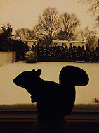 Merrick, New York, US. January 26. 2015. Squirrel statue on window sill with snowy backyard, Blizzard of 2015. iPhonography