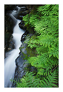 Ferns and creek, Samuel H. Boardman State Scenic Corridor, Oregon