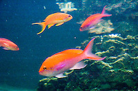 School of Fish at The New Jersey State Aquarium