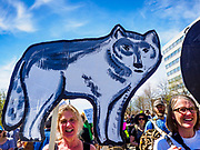 22 APRIL 2017 - ST. PAUL, MN: A marcher at the Minnesota March for Science carries a cardboard cutout of a gray wolf, which is native to Minnesota. More than 10,000 people marched from the St. Paul Cathedral to the Minnesota State Capitol in St. Paul during the March for Science. March organizers said the march was non-partisan and was to show support for the sciences, including the sciences behind climate change and vaccines.      PHOTO BY JACK KURTZ