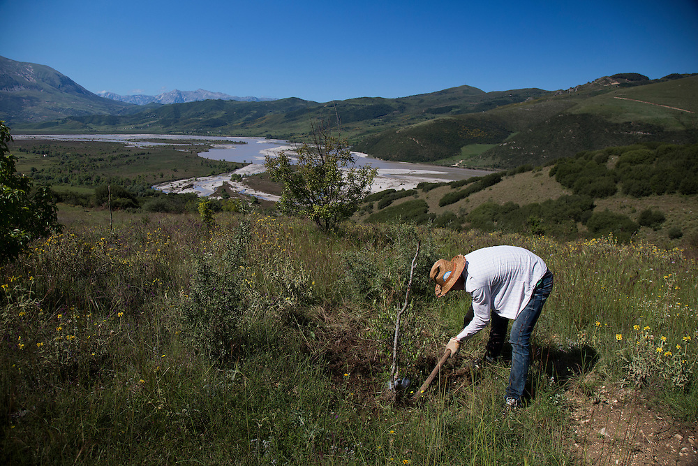 A laborer from Kuta works hoes the earth around one of Taulant Hazizaj's 3,800 olive trees above the Vjosa River. The entire section pictured here will be flooded by the reservoir, if the Pocem dam is built.