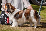 Cheswardine Dog Show 2016