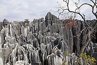 Chine. Yunnan. Foret de pierre de Shilin a Lunan. // Limestone pinnacles in Shilin, Stone Forest, at Lunan, Yunnan, China