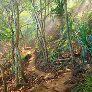 Trail to Hideaways Beach (Pali Ke Kua)- Princeville, Hawaii.  Early morning sun shining through sea-spray from very heavy surf.