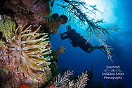 Grand Cayman - Cayman's beautiful reefs!