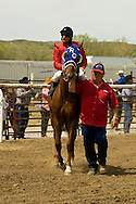 Trainer leads horse to winners circle after winning quarter horse race, Miles City, Montana