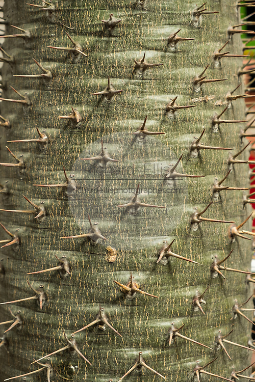 The spines of a cactus in the garden art at the Chapel of Jimmy Ray by American artist Anado McLauchlin in his compound Casa las Ranas September 28, 2017 in La Cieneguita, Mexico.