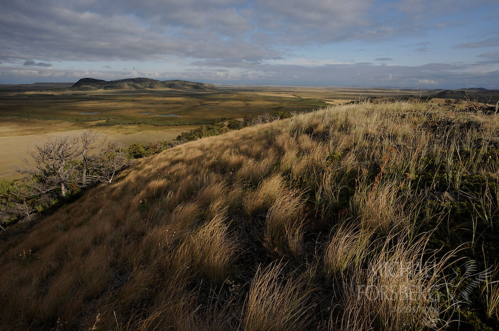 Where the high country meets the Plains, rough fescue grasslands wash through limber pine savannah and up the foothills of the Rocky Mountain Front.  In the distance, the sprawling fen wetland and river complex anchors some of the best grizzly habitat in the continental U.S.  TNC Pine Butte Swamp Preserve, Montana.