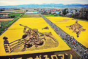In northern Japan the small village of Inakadate plants five different varieties of rice to produce, all different colours.  &quot;Rice field art&quot; This is an annual event and attracts many thousands of tourists. Every year in autumn they have a different subject matter to be viewed. <br />