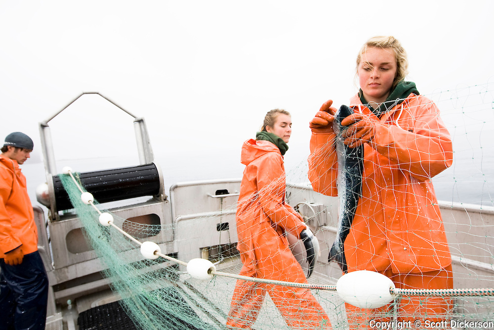 Deckhands pick fish from the gillnet while commercial sockeye salmon fishing in the Eastern Aleutian Islands, area M, region aboard the F/V Lucky Dove.