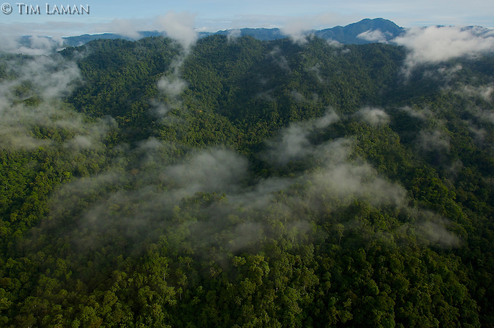 View of the Foja Mountains from the helicopter on the trip between Bog Camp and Kwerba village.