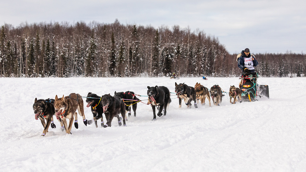 Musher Lance Mackey after the restart in Willow of the 47th Iditarod Trail Sled Dog Race in Southcentral Alaska.  Afternoon. Winter.
