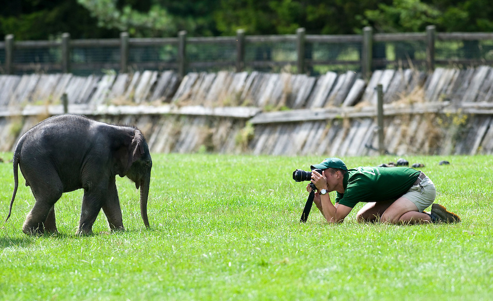 Dunstable England July 28th Andrew Durham keeper at the Elephant enclosure takes a picture during the photocall for the new born elephant at Whipsnade Zoo ZSL. The baby elephant not yet named  was born on Thursday the 23rd and now weight around 120Kg<br /> <br /> <br /> <br /> ***Standard Licence  Fee's Apply To All Image Use***<br /> Marco Secchi /Xianpix<br />  tel +44 (0) 845 050 6211<br />  e-mail ms@msecchi.com or sales@xianpix.com<br /> www.marcosecchi.com