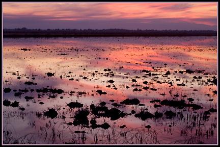 Rice fields sunset