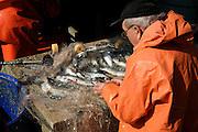 fisherman sorting fish on boat