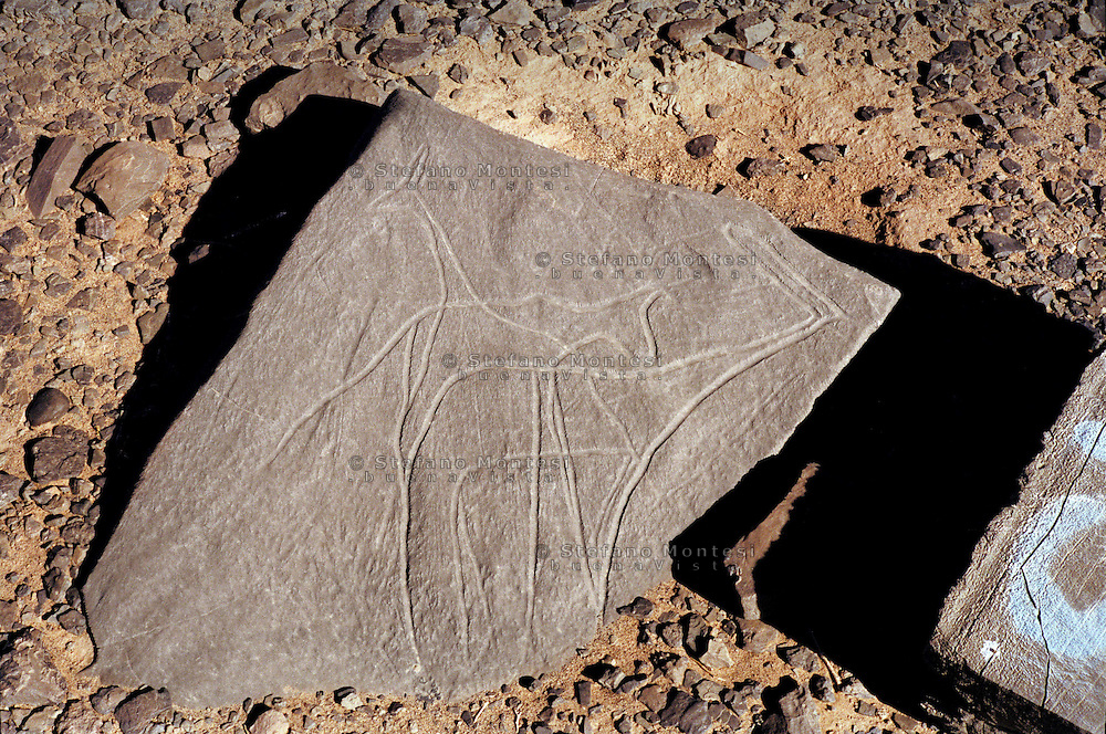 """The prehistory of Western Sahara in a regional context: the archaeology of the """"free zone""""..Rock-art: prehistoric engravings on stone slabs in open air near track running from .Tindouf/Rabuni to Bir Lahlou and Tifariti. Estimated age of engravings: 4000-2000 before present, possibly earlier. Giraffe assemblage.Rock substrate: Devonian sandstone"""