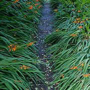 Pathway, Trelissick