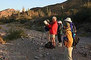 Passengers from Lindblad cruise ship birdwatch amid cardon cacti of Isla San Esteban; Sea of Cortez; Baja, Mexico.