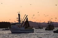 F/V Crescent Moon, a commercial fishing seiner, brings in its net at sundown during the Sitka Sound herring sac roe fishery in Alaska.