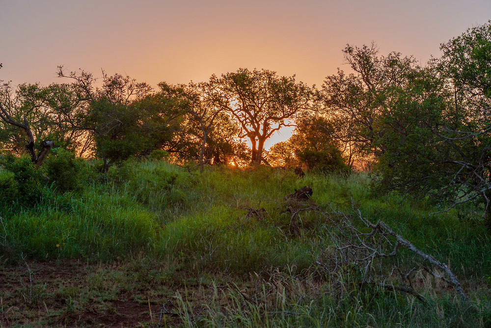 The sun slips below the African horizon in the bush leaving a glow in its wake.