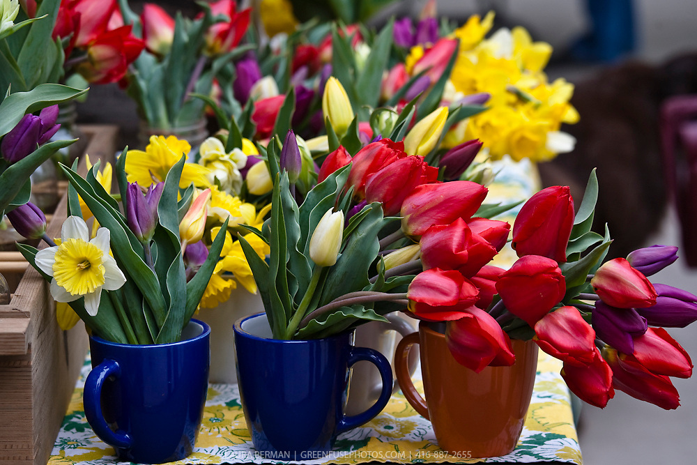 Spring tulips and daffodils in brightly coloured coffee cups on display at a farmers market.